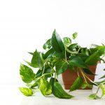 Huonekasvien lisääminen