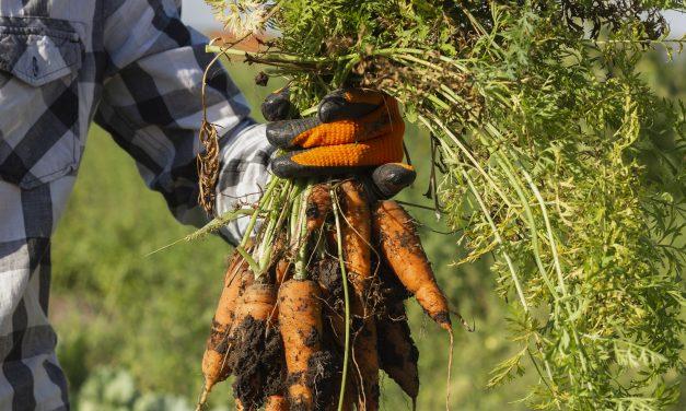 Lukijavinkki: kasvata porkkanoita